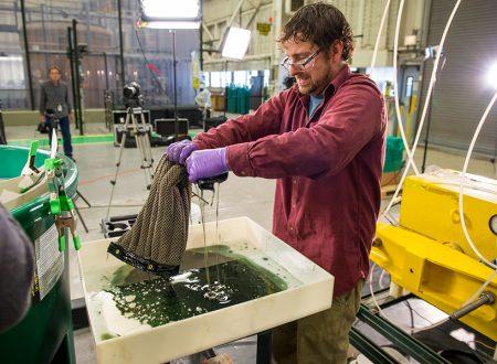 Pulire il mare con una spugna? Si può con Oleo Sponge